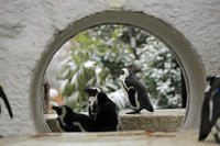 壁の穴は壁で塞げ - 動物園のど!