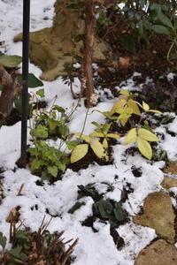 今日も雪景色 - 小さな庭 2