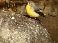 『木曽川水園の鳥撮り~』 - 自然風の自然風だより
