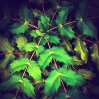 ・thorny plants・ - - Foliage & Blooms Foto -