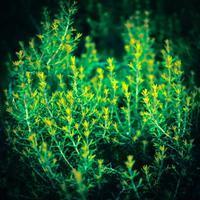 ・little yellow foliage・ - - Foliage & Blooms Foto -
