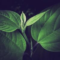 ・new leaf・ - - Foliage & Blooms Foto -