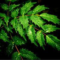 ・raindrops・ - - Foliage & Blooms Foto -