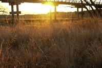 橋の下には - 長い木の橋