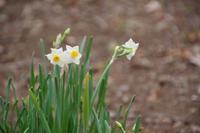 春を探しに山麓の公園へ - 季節の風を追いかけて