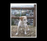 保護犬from香川 - Sparrow House diary