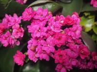 ハートが可愛い壁面花壇 - 神戸布引ハーブ園 ハーブガイド ハーブ花ごよみ