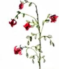 ふたりの約束… - rose rose♥Blog