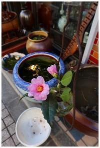 吊るし花瓶 -  one's  heart
