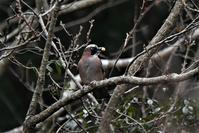 お山の鳥さん・・・ - 鳥と共に日々是好日