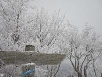 2月登山・毛無山② - 猪こっと猛進
