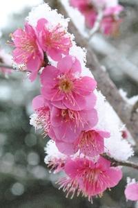 雪やこんこ - 千葉県いすみ環境と文化のさとセンター