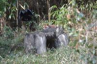 コウシロウの狩り - 動物園へ行こう