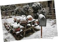 2019初積雪 - 気ままな Digital PhotoⅡ