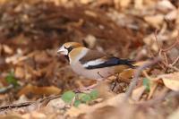 公園で出会った鳥さんたち♪ - happy-cafe*vol.2