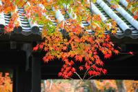 秋月城下町(その2) - レトロな建物を訪ねて