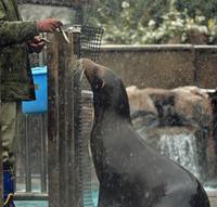情けは人のためならず - 動物園のど!