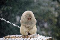 大根の根が長い年は寒い - 動物園のど!