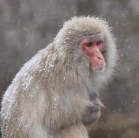 冬来たりなば春遠からじ - 動物園のど!