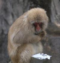 雪隠で饅頭 - 動物園のど!