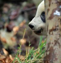 木の葉を隠すなら森の中 - 動物園のど!