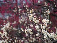 冬の京都を歩きました。(梅宮大社、松尾大社) (完) - ご無沙汰写真館