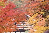 京都へ行く 2018・秋 (15) 南禅寺境内⑥(11/23-25) - 風の中で~