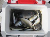 日曜日は熊本県天草市牛深へアジ釣りに行く - ステンドグラスルーチェの日常