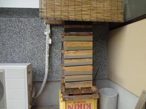 雄蜂のフタ。 - 鑑定士ハチの部屋