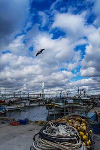 漁港寸景 - ぽとすのくずかご