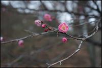 六義園-31 - Camellia-shige Gallery 2
