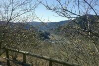 蝋梅 - 写真巡礼「日本の風景」