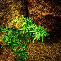 ・foliage of natural stone・ - - Foliage & Blooms Foto -