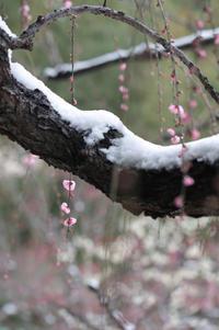 雪の後楽園 - *ハルイロ*