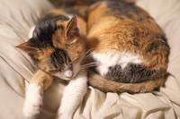 眠り猫 - 節操のない写真館