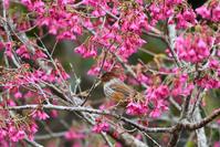 台湾野鳥撮影その15 - 季節の映ろひ