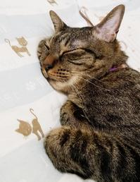 猫柄の布団 - キジトラ猫のトラちゃんダイアリー