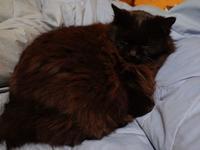 ★ Le chat noir dort. - うちゅうのさいはて