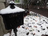 雪がしんしんと&お知らせ - 手柄山温室植物園ブログ 『山の上から花だより』