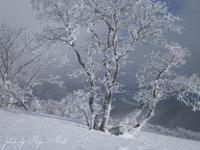 樹氷がきれい - Ryu Aida's Photo