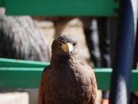 掛川花鳥園へ行ってきました - pottering