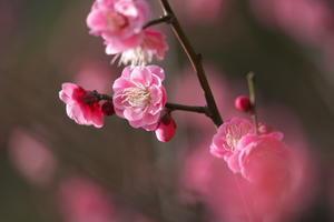 新宿御苑から春の気配を - 優しい時間 by gintaro