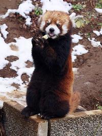 2月13日(水)休日出勤 - ほのぼの動物写真日記