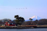 富士山と白鳥編隊飛行をこれまでと違うアングルで撮ってみた・・・多々良沼 - 『私のデジタル写真眼』