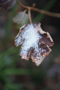 シャラシャラーと不思議な雪が - 毎日が思い出…
