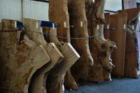 材木の下見 - SOLiD「無垢材セレクトカタログ」/ 材木店・製材所 新発田屋(シバタヤ)