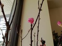 桃の花 - フラワーショップデリカの花日記