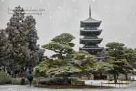 雪の朝のお写んぽ! - 気ままな Digital PhotoⅡ