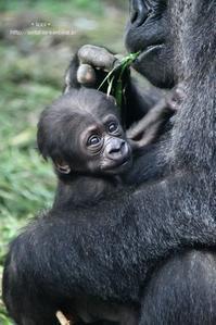 げんきママのしあわせ - 動物園でお散歩