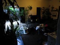 植物「ホームシック」 - 孤影悄然